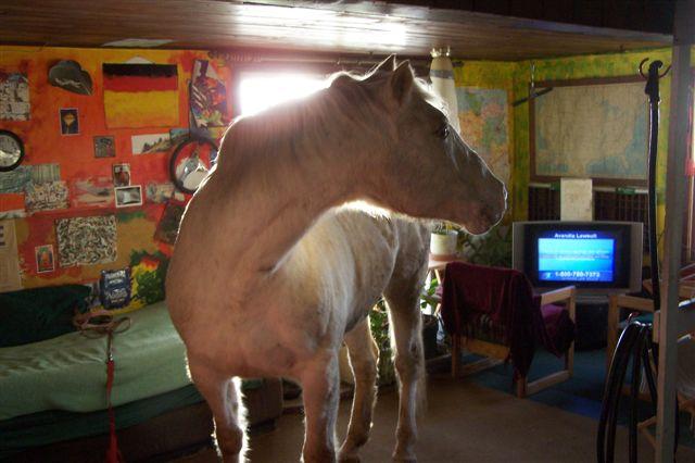 Da steht ein Pferd ... nicht auf dem Flur sondern im Wohnzimmer.