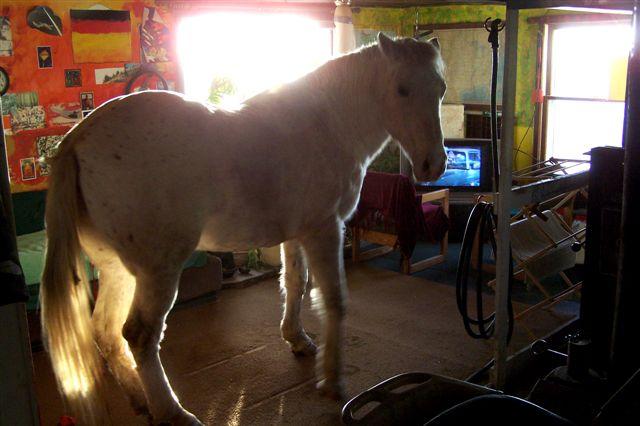 Guckt da jemand Horse.TV?